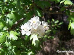 FloresEspino