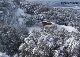 Nevà Grossa